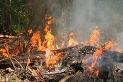 Incêndio florestal Foto de Stock