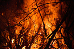 Incêndio florestal Foto de Stock Royalty Free