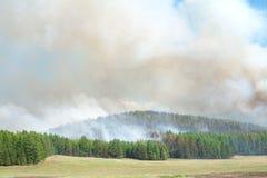 Incêndio florestal Imagem de Stock
