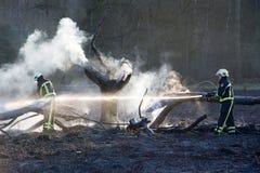 Incêndio florestal Fotos de Stock Royalty Free