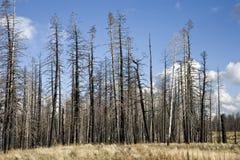 Incêndio florestal (AG) imagem de stock