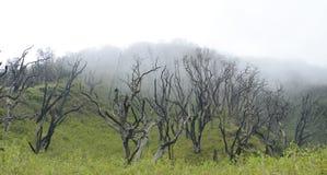Incêndio florestal inoperante do cargo das árvores Fotografia de Stock Royalty Free