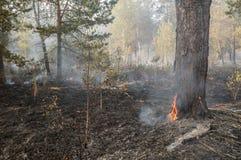 Incêndio florestal no verão Imagens de Stock