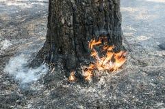 Incêndio florestal no verão Fotografia de Stock Royalty Free