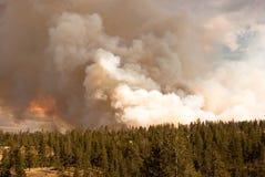 Incêndio florestal Raging Imagem de Stock