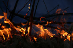Incêndio na floresta imagem de stock