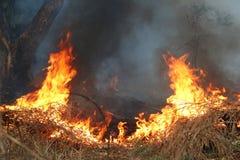 Incêndio na grama seca e nas árvores Fotografia de Stock Royalty Free