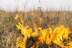 Incêndio na natureza Imagem de Stock Royalty Free