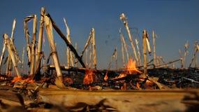 Incêndio no campo de milho Imagens de Stock Royalty Free