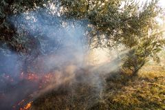 Incêndio violento da floresta devido ao tempo ventoso seco Atravessar claro dos raios de sol o fumo pesado Feixe luminoso imagem de stock royalty free