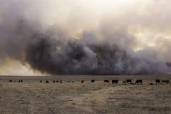 Incêndio violento da pastagem de Kansas imagem de stock