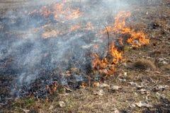 Incêndios florestais foto de stock