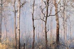 Incêndios florestais fotos de stock royalty free