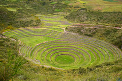 Inca agriculture field Royalty Free Stock Images