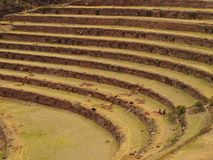 Inca agriculture terraces Royalty Free Stock Photo