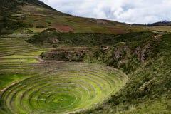 Inca circular terraces in Moray, Peru. Inca circular terraces in Moray, in the Sacred Valley, Peru. Moray is an archeological site, close to the village of Maras Royalty Free Stock Photos