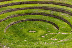 Inca circular terraces in Moray, in the Sacred Valley, Peru. Moray is an archeological site, close to the village of Maras. The ruins consist on several Stock Photography