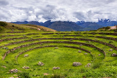 Inca cirkelterrassen in Moray, in de Heilige Vallei, Peru Stock Afbeelding