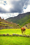 Inca city Machu Picchu (Peru) Royalty Free Stock Photography