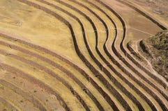 Inca ruins. Maray Maras incas ruins culture attraction for tourism Stock Photography