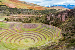 Inca Ruins of Moray. Circular Inca ruins at Moray in the Sacred Valley near Cusco, Peru royalty free stock photos