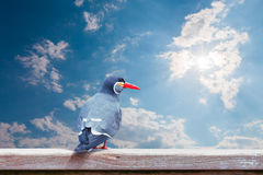Inca Tern Larosterna inca spotted perch on wood with sky backg Stock Images