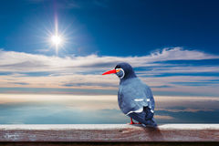 Inca Tern Larosterna inca spotted perch on wood with sky backg Royalty Free Stock Images