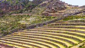 Inca Terraces. The ancient Inca Pisac terraces have been used for over 1000 years to grow the potatoes, quinoa, and maize that are diet staples; like the Stock Photography