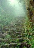 Inca trail. Steep stairway on the famous inca trail in Peru
