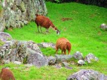 Machu Picchu Inca Trails, Country side of Peru. stock photo