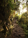 Inca trail in morning rays Royalty Free Stock Photography