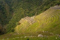 Inca Trail, Peru - August 03, 2017: Ancient ruins of Winay Wayna on the Inca Trail, Peru. Inca Trail, Peru - August 03, 2017: The Ancient ruins of Winay Wayna on stock photography