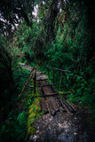 Inca Trail. A wooden bridge along the Inca Trail royalty free stock photo