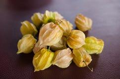 Incaberries Royalty Free Stock Photo