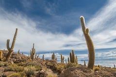 Incahuasi海岛,撒拉族de Uyuni,玻利维亚 免版税库存图片
