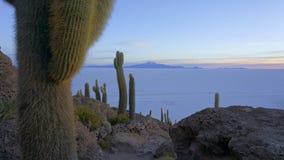 Incahuasi ö, Salar de Uyuni, Bolivia fotografering för bildbyråer
