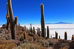 Incahuasi cactus Stock Photography