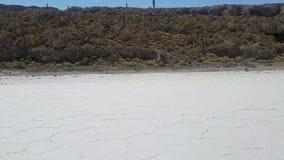 Incahuasi-Insel-alias Kaktus-Insel auf Salar de Uyuni, der größte das Salz-Sumpf der Welt stock video footage