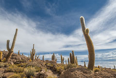 Incahuasi-Insel, Salar de Uyuni, Bolivien Lizenzfreies Stockbild