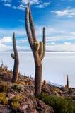 Incahuasi-Insel in Salar de Uyuni bolivien Stockbilder