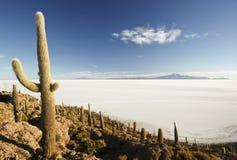 Incahuasi Island. The famous Incahuasi Island in the middle of the Salar de Uyuni in Bolivia Stock Photos