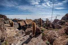 Incahuasi island  Cactus Island lokated at Salar de Uyuni the Royalty Free Stock Photos