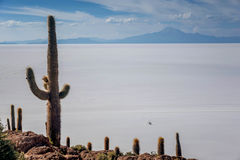 Incahuasi island  Cactus Island lokated at Salar de Uyuni the Royalty Free Stock Photo
