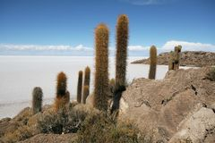 Incahuasi Island in middle of Uyuni Salt flats Stock Photos
