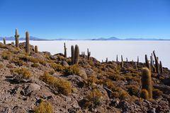 Incahuasi island in the salar de uyuni Stock Image