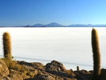 Incahuasi Island. Salar de Uyuni. Bolivia. Royalty Free Stock Photo