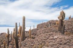 Incahuasi island in Salar de Uyuni, Bolivia Royalty Free Stock Images