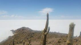 Incahuasi wyspa także znać jako Kaktusowa wyspa na Salar De Uyuni światu Wielki Solankowy bagno zdjęcie wideo