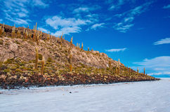 Incahuasieiland in Salar de Uyuni bolivië Stock Afbeeldingen