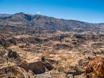 Incan террасные поля в долине Colca Стоковые Фотографии RF